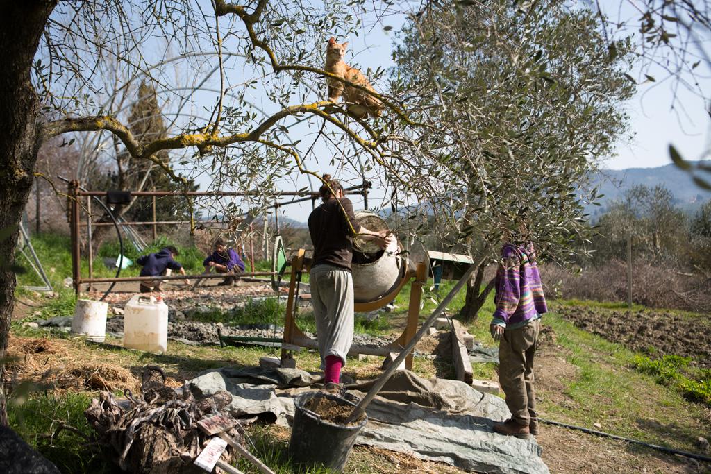 Mondeggi, marzo 2014. Lavori di ristrutturazione della serra, stesura del pavimento in argilla e paglia. © Federico Barattini