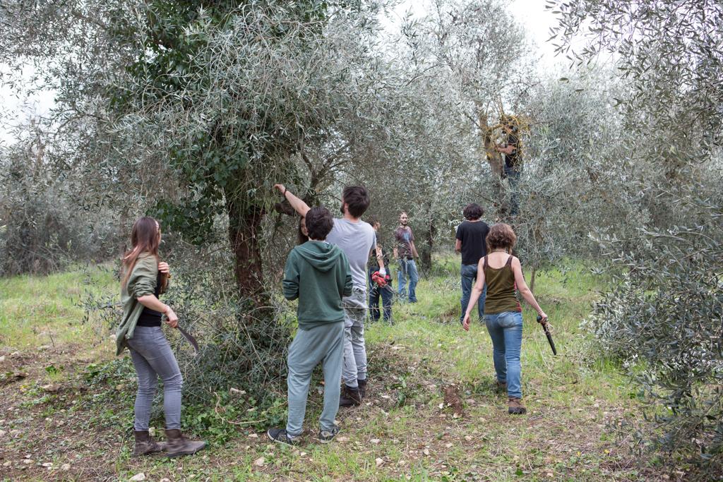 Mondeggi, marzo 2015. Scuola contadina, giornata di lezione sulla potatura degli ulivi.