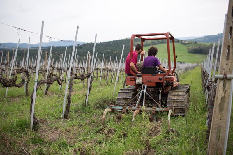 Mondeggi, aprile 2015. Lavorazione del terreno nella vigna con il nuovo trattore. © Federico Barattini