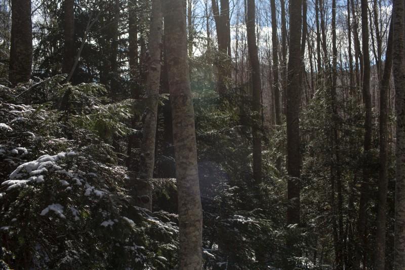 001__29A0953_wilderness