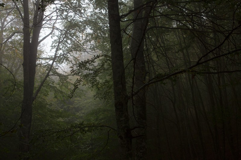 027__29A2633_wilderness